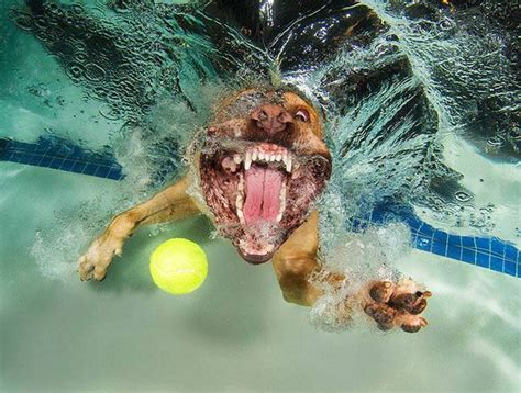 hilarious   dogs   fetch  ball