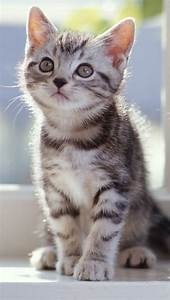 Tabby Kitten | CUTE CATS 1 | Pinterest | Cat, Adorable ...