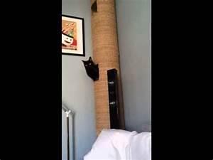Arbre À Chat Pour Gros Chat : tuyau arbre a chat 2 youtube ~ Nature-et-papiers.com Idées de Décoration