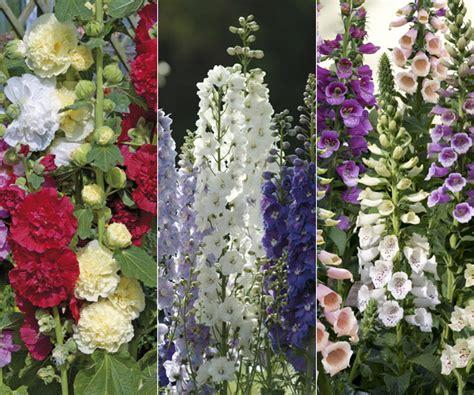 buy 60 large plants cottage garden perennial
