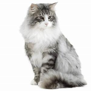 Site De Discussion : petites annonces de chats et de chatons vendre acheter mon chat ~ Medecine-chirurgie-esthetiques.com Avis de Voitures