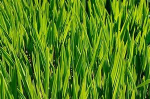 Die Farbe Grün : die bedeutung und wirkung von farben werbung gin ~ A.2002-acura-tl-radio.info Haus und Dekorationen