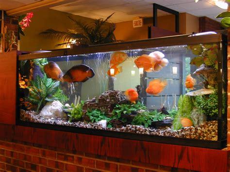 achat aquarium pas cher achat vente acheter aquarium pas cher
