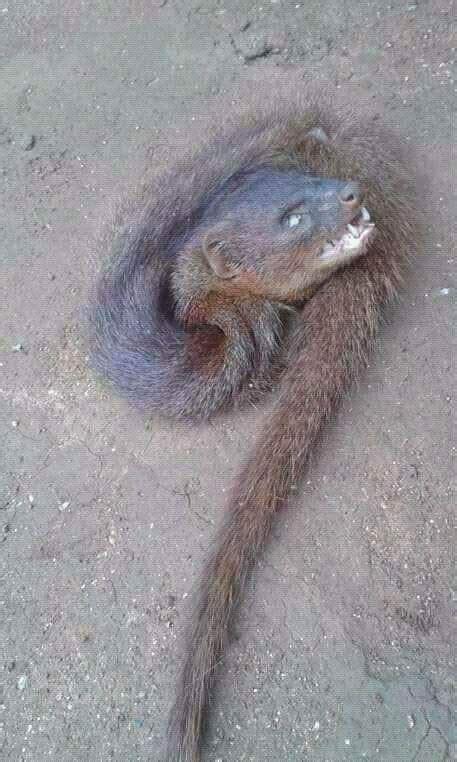 See Photos Of A 'Weird Ferocious Creature' That Has Got