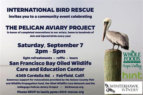 international bird rescue every bird matters 187 blue