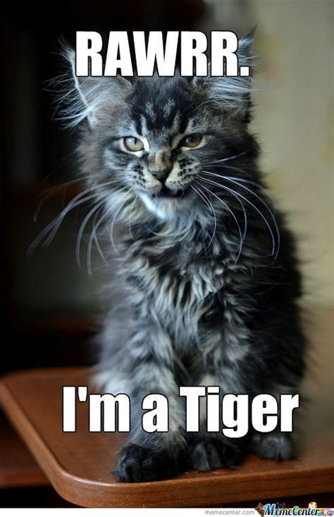 Tiger Meme 49 Tiger Memes Graphics Pictures Images Photos