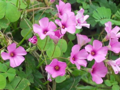 fiori in italia fiori di co italia flowers flowers and