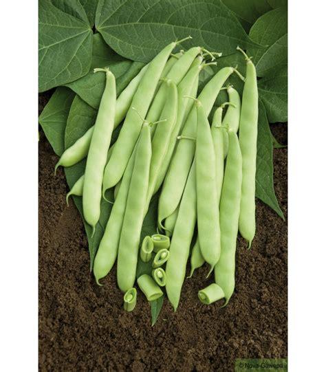 cuisiner les haricots mange tout boite de graines a semer de haricot mangetout nain dulcina