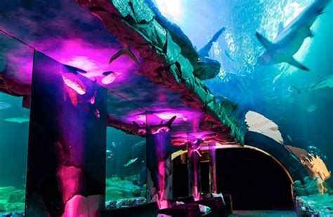 l aquarium 224 16 75016 location de salle de mariage salle de reception 1001salles
