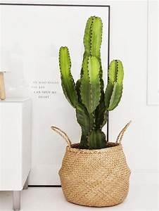 Cache Pot Interieur : 17 meilleures id es propos de d cor de plantes d ~ Premium-room.com Idées de Décoration