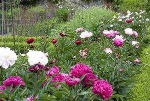 What is a Perennial Flower or Plant?