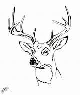 Deer Coloring Head Drawing Elk Easy Pages Skull Drawings Stag Antlers Draw Heads Printable Paintingvalley Getdrawings Sketch Print Whitetail Explore sketch template
