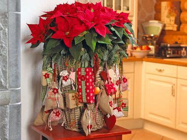 weihnachtsstern pflanze deko praxis bloom s deko ideen mit blumen und pflanzen