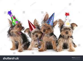 Happy Birthday Yorkie Images Puppies