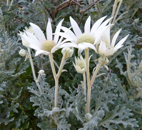 pictures of a flower flannel flowers 171 margosnotebook