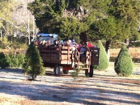 28 best cut your own christmas tree tn blackjack farm