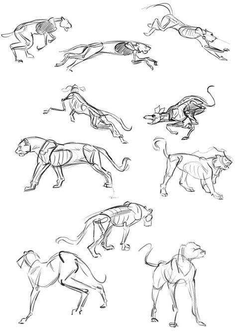 lets animate study  legged animals animal structures
