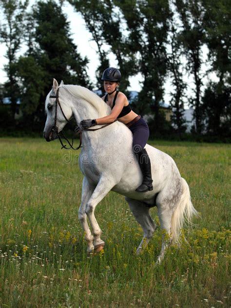 rearing horse bareback arabian equestrian woman stallion young his