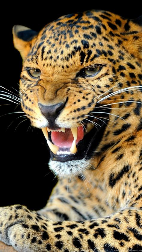 Animals Hd Wallpapers For Mobile - animals jaguars wallpapers hd desktop and mobile