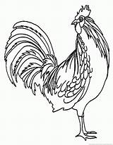 Rooster Coloring Pages sketch template