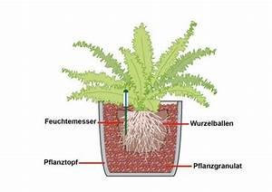 Hydrokultur Shop Online : seramis tongranulat f r zimmerpflanzen seramis pflanz granulat f r zimmerpflanzen 30 l kaufen ~ Markanthonyermac.com Haus und Dekorationen
