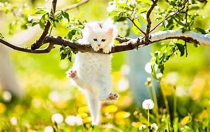 Spring Backgrounds Cat Animal Kitten Tree Branch