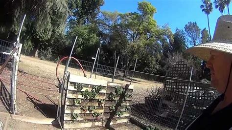 Vertical Gardening Strawberries by Vertical Gardening Strawberries In A Palette Fruit In 3