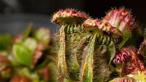Carnivorous Plants Around The Globe Use Similar Deadly ...