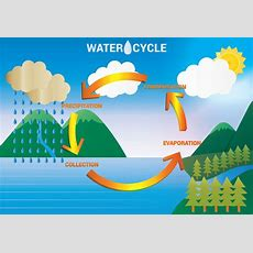 Diagram Of Water Cycle  Printable Diagram
