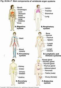 Organ Anatomy Human Map