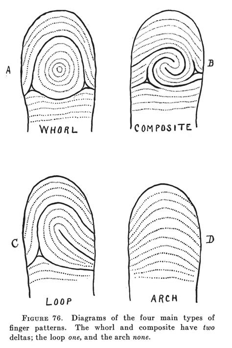 """""""No Two Finger Prints Are Alike"""" – Fingerprinting in the"""