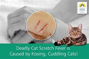 1000  Ideas About Cat Scratch Disease On Pinterest