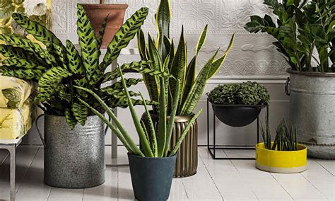 Tall Artificial House Plants Uk