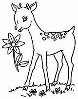 Deer Coloring Pages Baby Printable sketch template