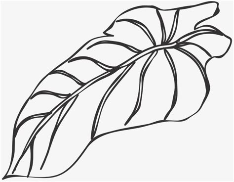 drawing leaves  clipart plant  drawing