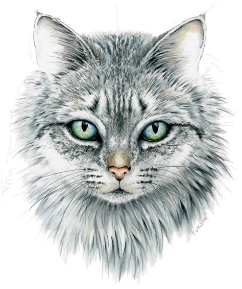 domestic cat face framed original drawing wildlife
