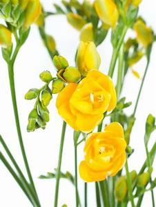 Aktuelle Blumen Im April : die besten 10 gelbe blumen ideen auf pinterest ~ Markanthonyermac.com Haus und Dekorationen