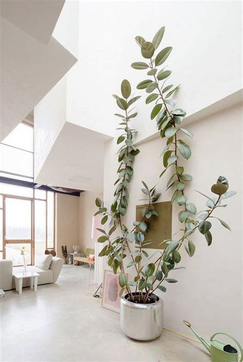 decorate  tall indoor plants