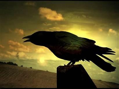 Raven Wallpapers Dark Sunset