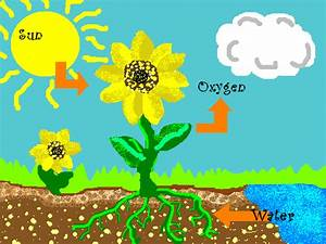 Free Photosynthesis Cliparts  Download Free Clip Art  Free