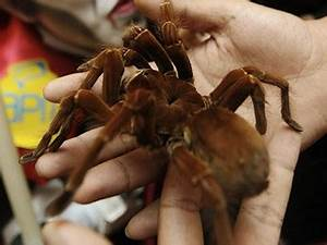 The Goliath Bird-eating Spider - The Biggest Spider On ...
