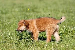 Schneckenkorn Giftig Für Hunde : giftige pflanzen f r hunde gefahr in haus garten ~ Lizthompson.info Haus und Dekorationen