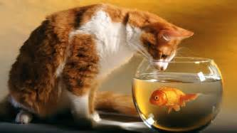 fish cat cat and fish wallpapers hd wallpapers