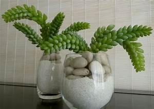 Grnpflanzen In Der Kleinen Wohnung Richtig Platzieren