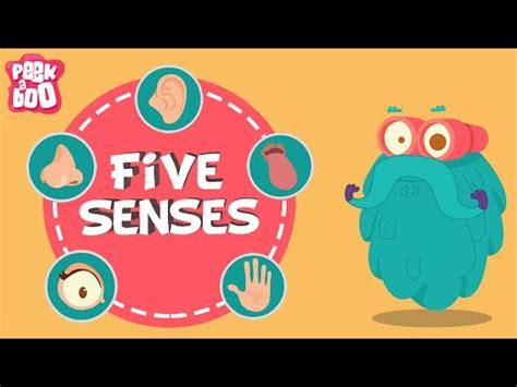 senses  dr binocs show educational