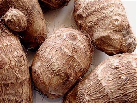 recette de cuisine camerounaise gratuit taro définition et recettes de quot taro quot supertoinette