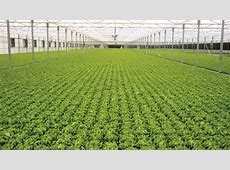 From Israel with Love – Hightech hydroponics makes its U