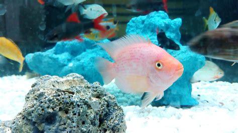 guide  aquarium heater sizes