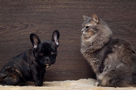 scared cats dog pet checked fact june