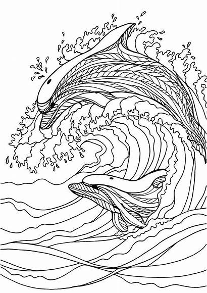Coloring Adult Pages Dolphin Colouring Sheets Mindfulness